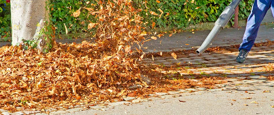 How a Fall Lawn Cleanup Helps Your Yard