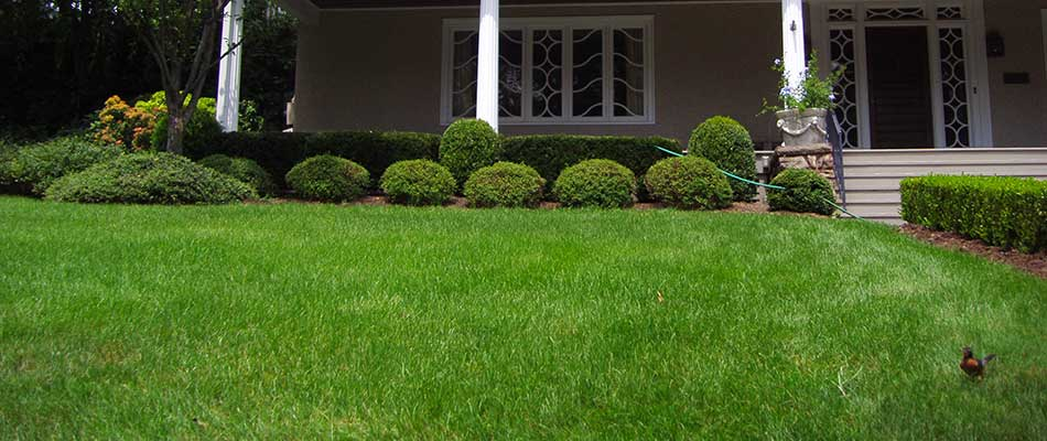Lawn Maintenance Services Your Lawn Needs This Spring