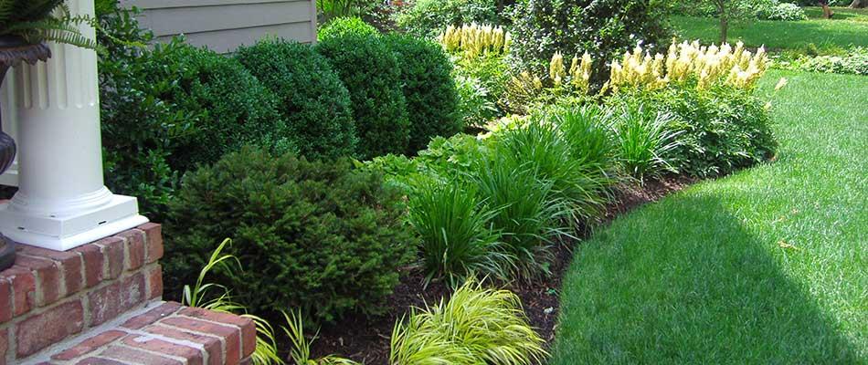 3 Low Maintenance Shrubs For Landscapes In Scotch Plains Nj Stream Line Lawn Landscape Blog