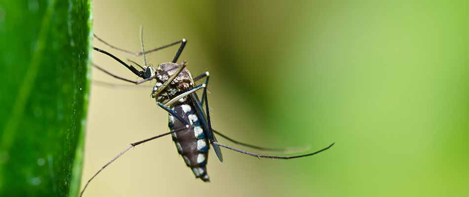 Effective Ways to Keep Mosquitoes Away From Your Yard