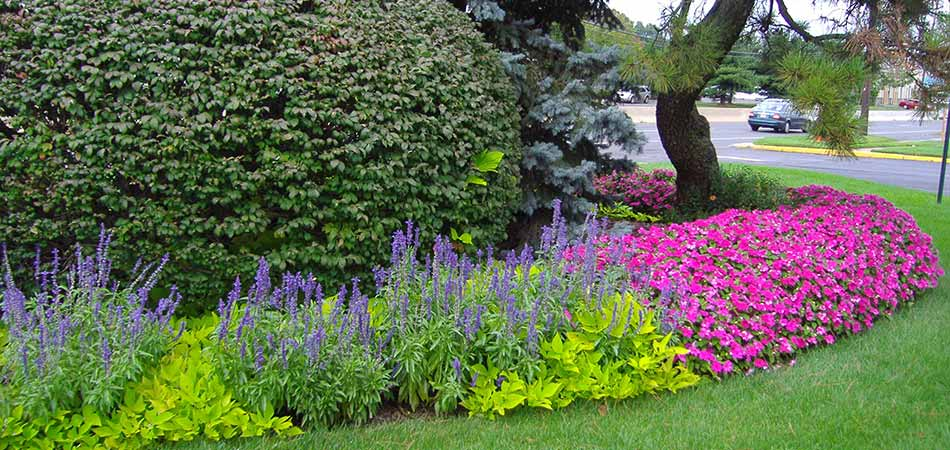 Property owners that utilize our plant health services see the difference in how much more lush their landscape plants grow.