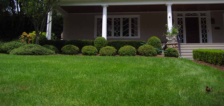 Lawn Care Tips for Winter in Watchung, NJ