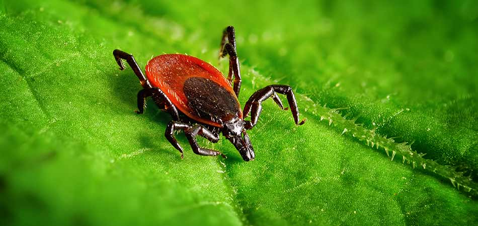 Westfield has seen an explosion in their tick population in recent years.