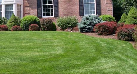 Lawn mowing, fertilization,weed control. and landscape maintenance all included in our packages.