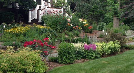 Healthy thriving plants and landscaping in the backyard of a residential property in Warren.
